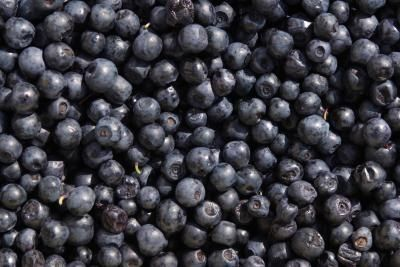 How to Grow Blueberry Plants From Seed (using frozen blueberries) WHAT!