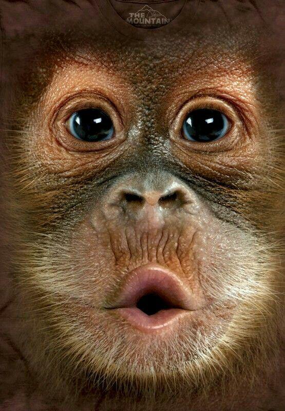 Motobécane 1987 2ad63d7e762544e0f49ff511210190e4--baby-orangutan-orangutans