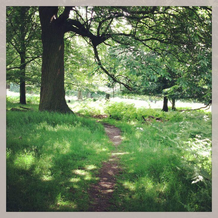 Richmond Park by Cloth & Clover