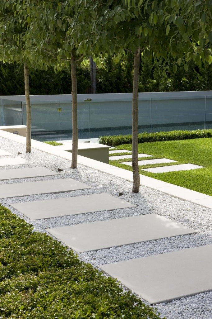 Pavers in pebbles- pleached row of trees