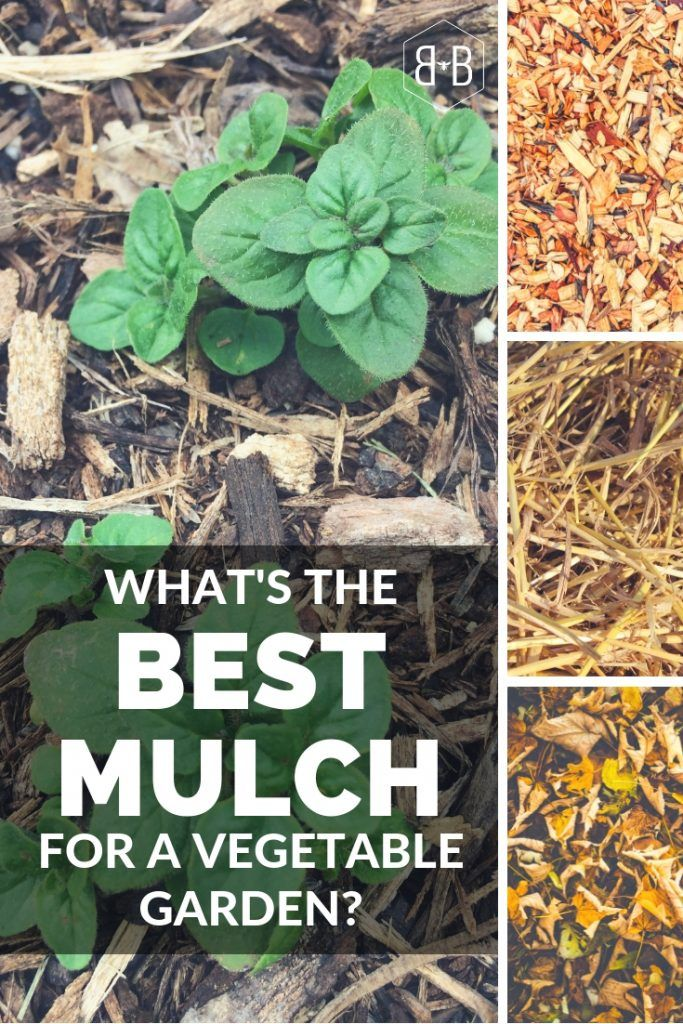 What S The Best Mulch For Vegetable Gardens Bee And Basil