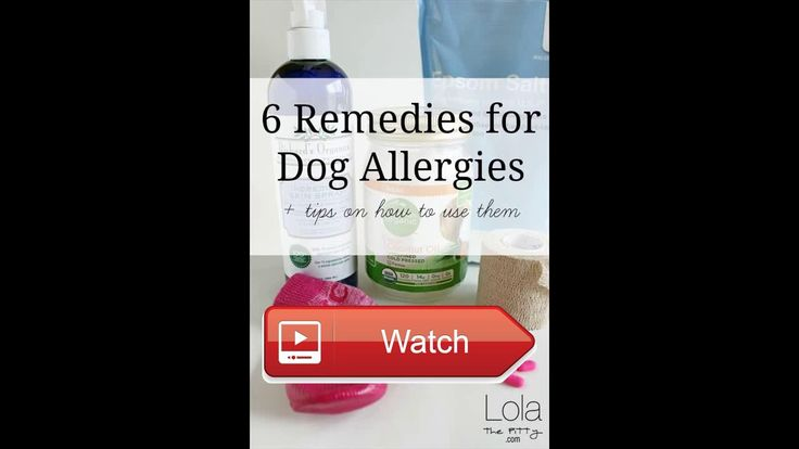 best allergy medicine for cats and dogs  For more detail informations please visit  on Pet Lovers