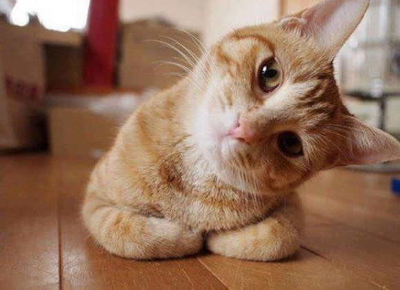 Hmmmmm.... Let me think about this. Cute animals