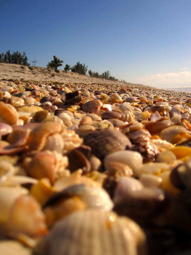 Captiva Island, FL shells. It really does look like this!! One of the best shelling islands in the world!