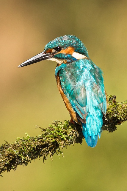 Moss Bros, Kingfisher                                                                                                                                                     More