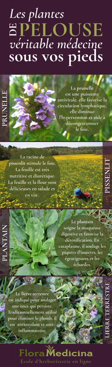 Les plantes de pelouse - véritable médecine sous vos pieds | FloraMedicina, école d'herboristerie en ligne