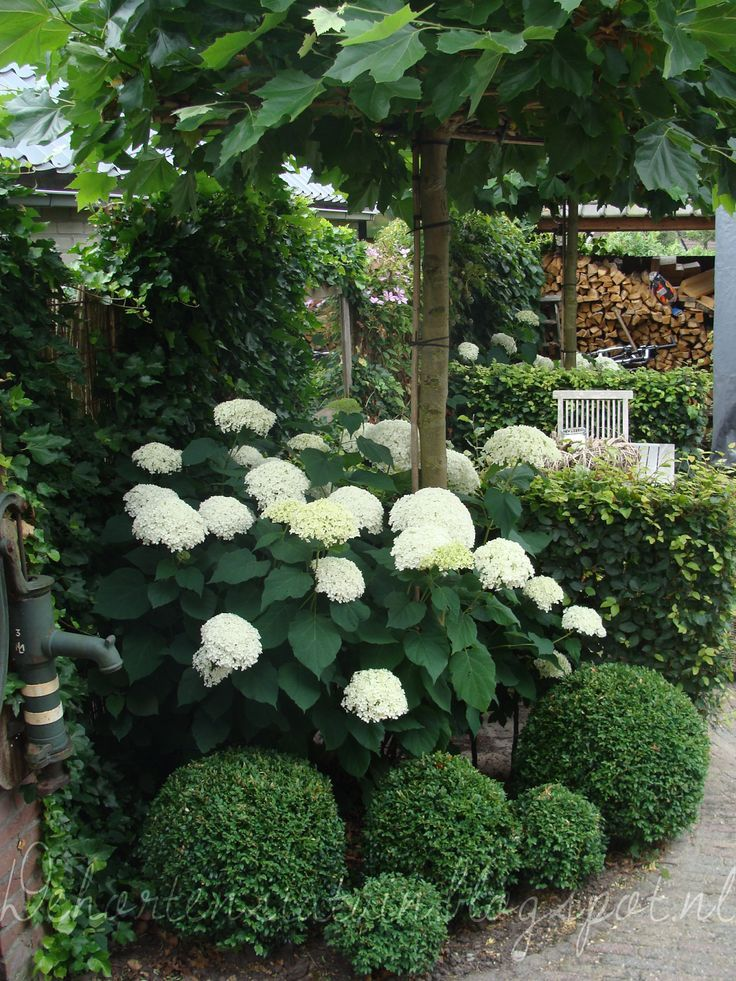 Like the way the boxwoods sit below the Annabelle hydrangea, boxwood, fig (Front corner maybe?)