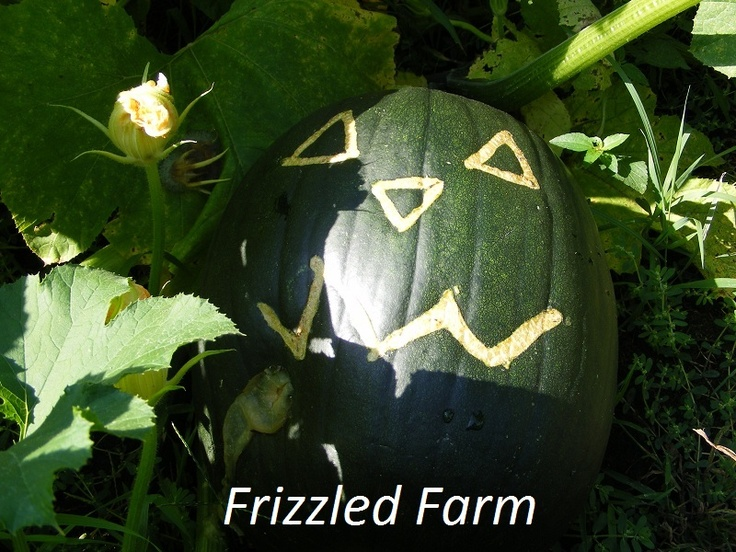 27 best images about pumpkin scarring on pinterest for Best pumpkins to grow
