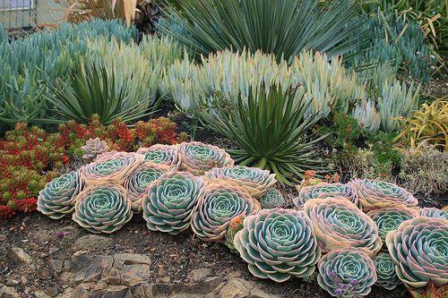 Echeveria imbricata and Agave ocahui by David Feix Landscape Design, via Flickr