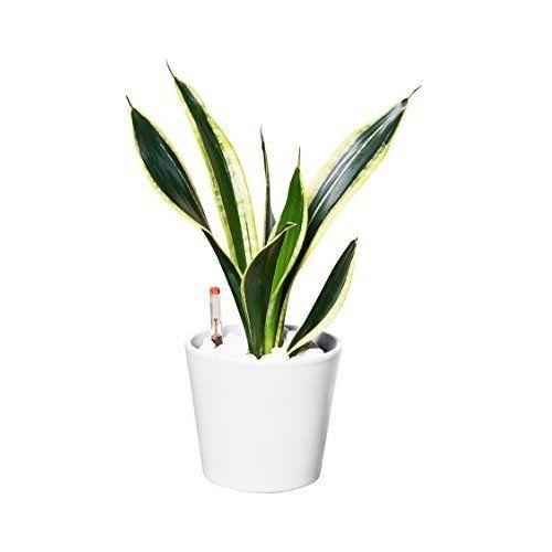 Fein Indoor Garten Anlegen Geeignete Pflanzen Fotos ...