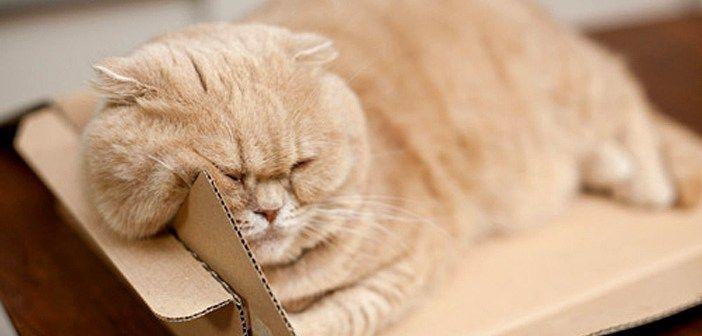 ほっぺがたるんでる猫