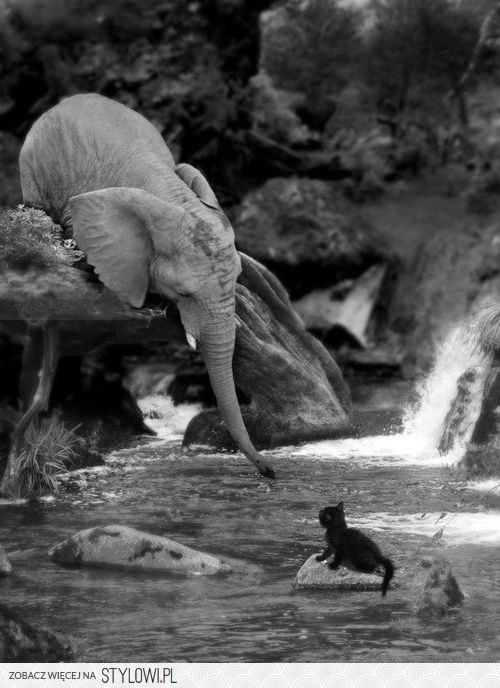 Elephant Precarious! This is why I love elephants. How could not think this is cute? They are so caring! ----------------------------------------------------- Omg this is my future elephants saving one of my ten thousand cats who somehow got stuck in the middle of the fancy river in my back yard that I forced Colman and spencer into building for me.  Perfection.