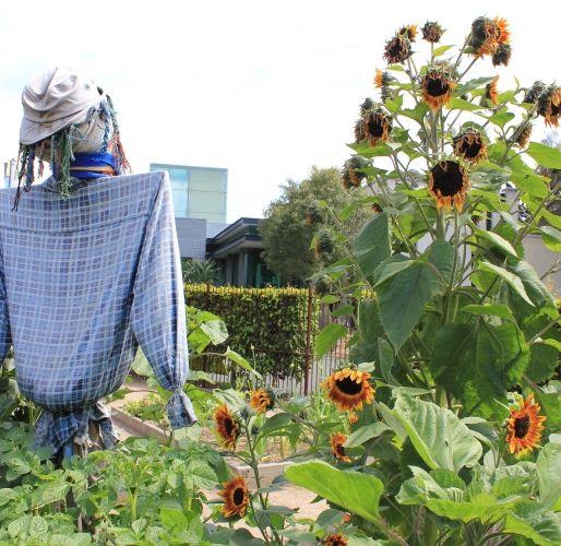 Ian Potter Children's Garden // Royal Botanical Gardens Melbourne // Say hello to the scarecrow