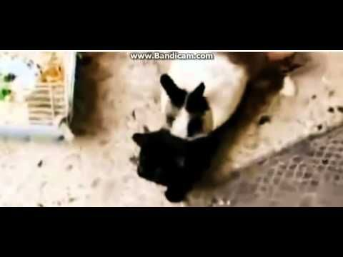 FUNNY CAT COMPILATION - BIGGEST VIDEO of Funny Kitty Cat Fails part5 - http://positivelifemagazine.com/funny-cat-compilation-biggest-video-of-funny-kitty-cat-fails-part5/ http://img.youtube.com/vi/TQccdC-DOnk/0.jpg                                             Funny Cat game on mobile. Talking Tom Cat back again on mobile! What will he bring to us? Some new interesting story and animation? Let's join the game Cat …    source