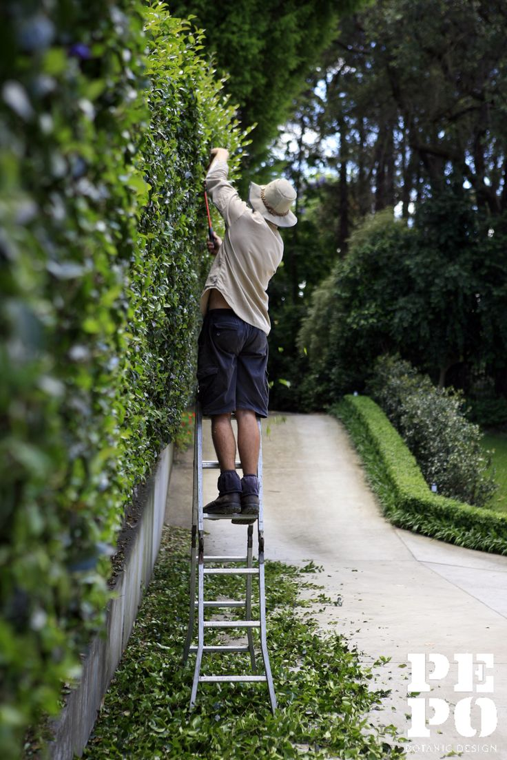Cheltenham garden maintenance   Sydney, New South Wales  By Pepo Botanic Design