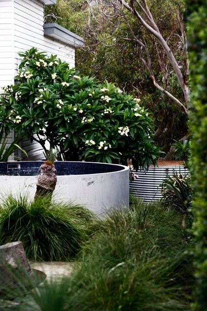 A stylish Sydney landscape featuring an Australian Plunge pool nicely nestled in .