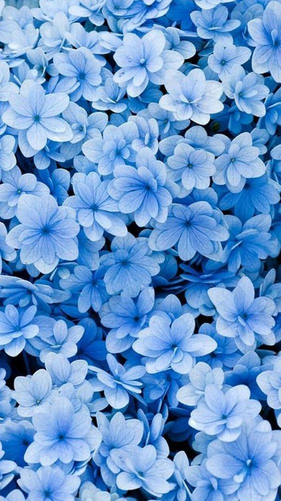 Pin On Iphone Wallpaper Blue floral wallpaper iphone