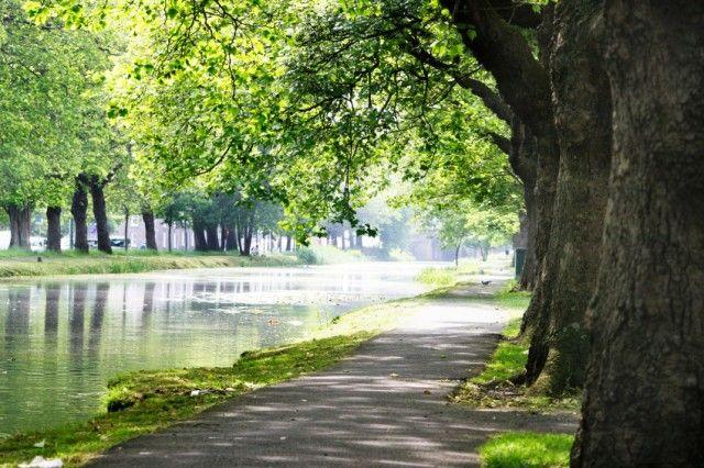 Passeggiare tra gli alberi azzera lo stress e allontana il rischio della depressione