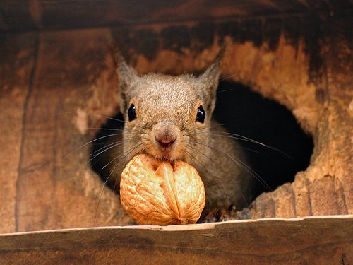 collecting nuts: Secret Squirrels, Autumn Fall, Fall Time, Walnut, Birds House, Storms, Families, Stores Food, Animal