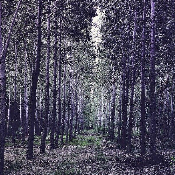Fotózás @zita_csigoval a felsőpakonyi erdőben. Gyönyörű szép volt.  #chillout #silence #lifestylephoto #lifestylephotography #igers #ikozosseg #mik #magyarig #instahunig #instahun #hungarianblogger #happyme #happyblogger #instadaily