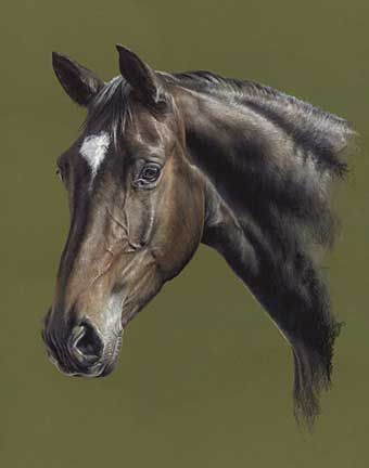 'Bella' horse pastel painting by Mary Herbert