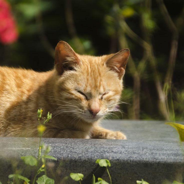 © copyright by @tom.shanghai . . Eins von vielen Fotos die ich von dieser Katze auf einer Insel von Xiamen gemacht habe. . . . . #katze #cat #china #xiamen #travel #travelphotography #travelblogger #�� #cutecat #urlaub #chinatravel #Nikon #D #7000 #D7000 #NikonD7000 #photography #nikondeutschland #photooftheday #ig_asia #ig_animals #ig_china #ig_nikon #ig #nikonphotography http://tipsrazzi.com/ipost/1507122665080876167/?code=BTqYBQtFeyH