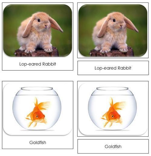 Pets Safari Toob Cards - printable cards by Montessori Print Shop