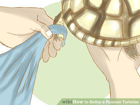 Image titled Bathe a Russian Tortoise Step 6                              …