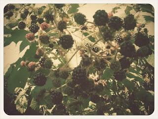 Blackberries, Whole wheat flour and Bar on Pinterest