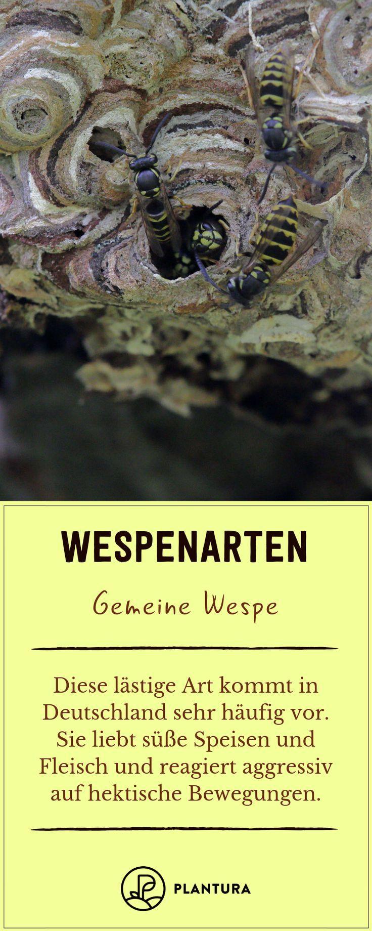 Wespenarten In Deutschland Plantura Gemeine Wespe Blumen Erkennen Schadlinge Im Garten