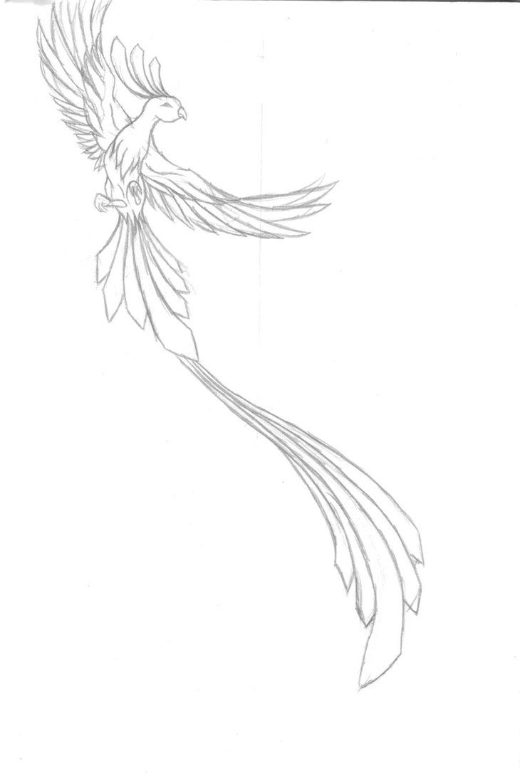 pheonix tattoo work in progres by smiley-sniggles