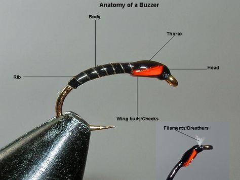 Anatomy of a buzzer