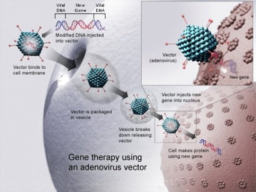 Gene Therapy: Tampering With DNA Using genes to generate protein therapies in the body. National Institutes of Health