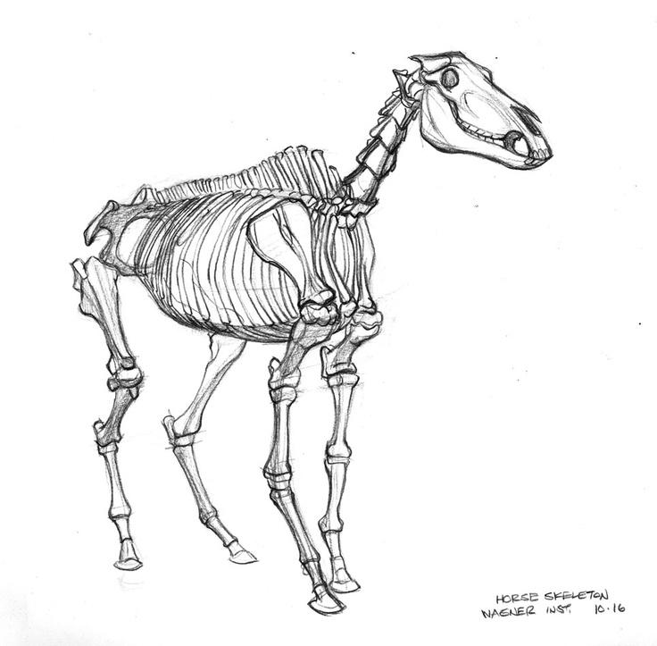 http://3.bp.blogspot.com/_J4WotscsLBE/StqMCDtif3I/AAAAAAAAD7Y/vDiXQdEQ0Fc/s400/horse-skeleton.jpg