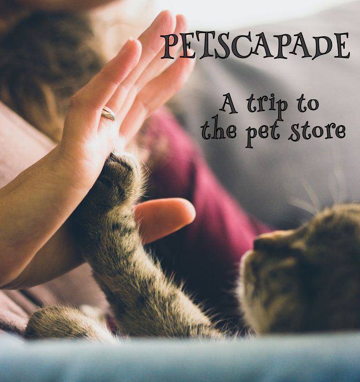 Petscapade! Read about m trip to the pet store and the start of this blog. #pets #stores https://petztrax.wordpress.com/2015/07/12/petscapade/