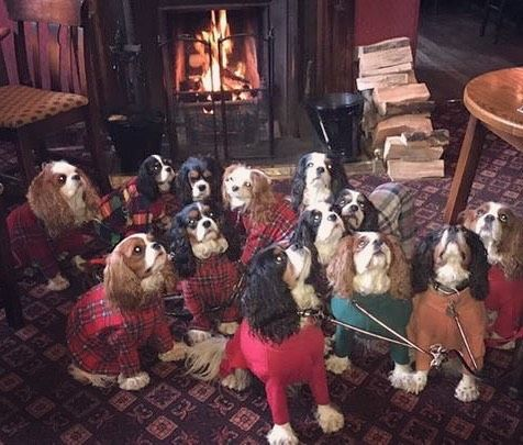 The Cramond Inn Edinburgh - as many dugs as possible welcome - pic from Dave Lawson