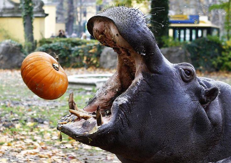 dallas zoo halloween nights