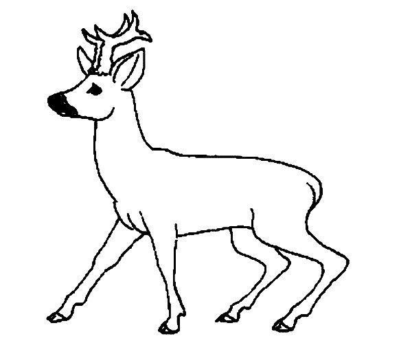 69 Best Roe Deer Siluets Graphic Tatoo Images On