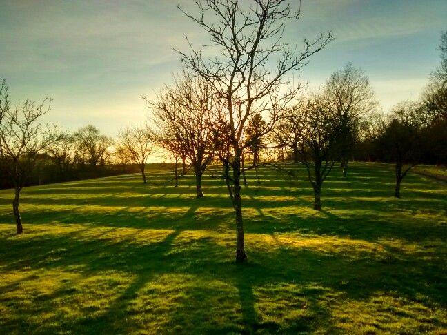 Backlit trees at Balmore Golf Club