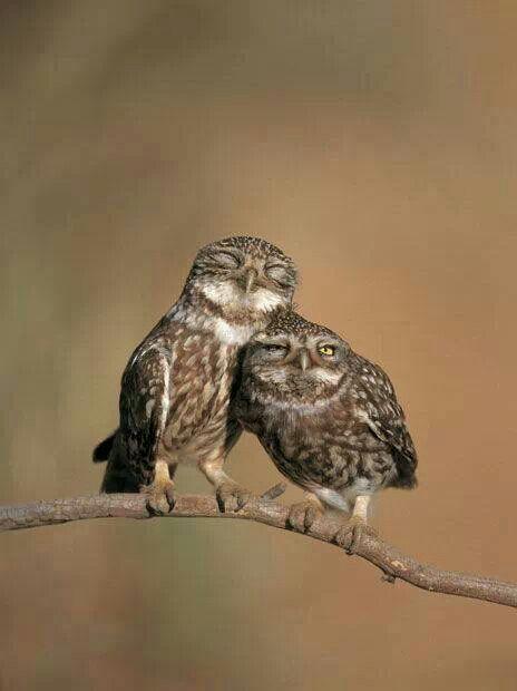 Owls seem to have a goofy way of looking sooo cute :-)