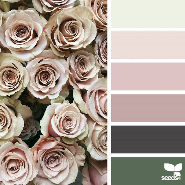 today's inspiration image for { rose tones } is by @heather_page ... thank you, Heather, for another breathtaking #SeedsColor image share!