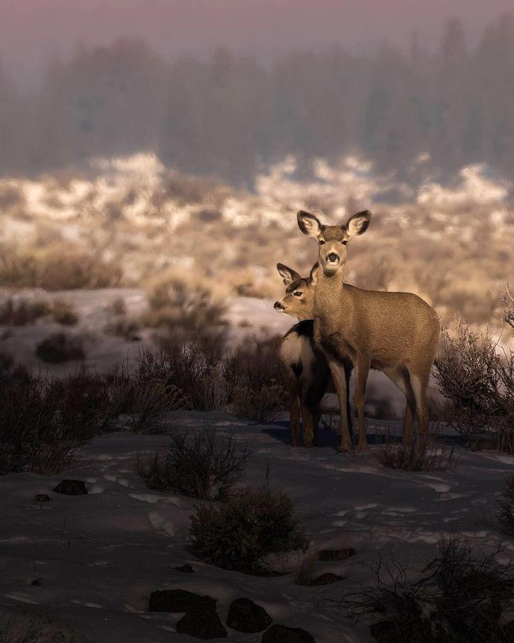 ☺☺☺Hunt More!���� Source@ksofich ������! . . . . . . . . . . . . . #hunt #huntlife #hunting #huntingseason #huntinglife #bowhunter #bowhunting #duckhunting #deerhunting #huntingdog #hoyt #huntereyesview #rifle #huntingworldwide #huntingarrows #elkhunting #boarhunting #wildlife #biggame #bow #arrow #animals #buck #elk #deer #shooting #nature #moose #whitetail #outdoors http://misstagram.com/ipost/1553716040335236523/?code=BWP6IG6Ah2r
