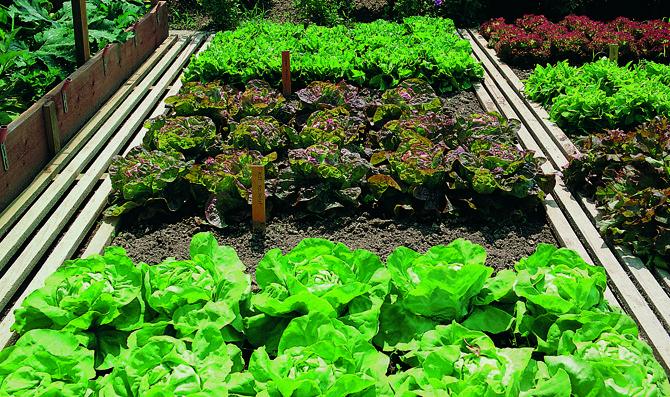 M s de 25 bellas ideas sobre rotaci n de cultivos en for Rotacion cultivos agricultura ecologica