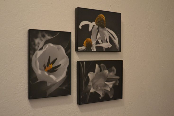 Wall hanging wall art set of 3 black and white color accent framed art flower photography