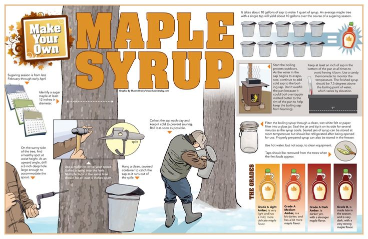 Make your own real maple syrup