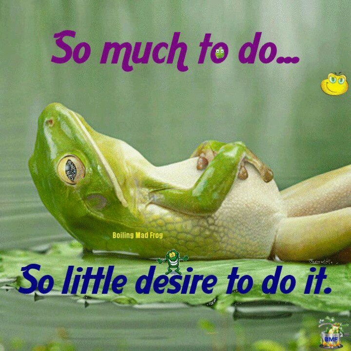 Cute Frog Quotes: Funny, Cute, Inspiring And Random!