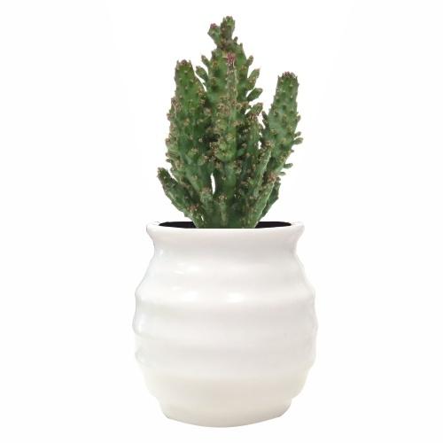 Opuntia Monacantha, en macetero HONEY, realizado en cerámica blanca brillante, disponible en MyCoolCactus.com; precio orientativo 5€, $6.17