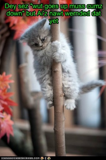 I  may be here a whileFunny Cat, Pets, Trees, Baby Animal, Kittens, Kitty, Baby Cat, Pole Dance, The Roller Coasters