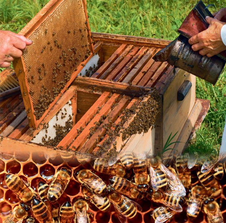 Επιδοτήσεις για μελισσοκόμους   Gigagora.gr   Μέχρι τις 28 Απριλίου έχουν τη δυνατότητα να καταθέσουν τα δικαιολογητικά που απαιτούνται οι ενδιαφερόμενοι μελισσοκόμοι που θέλουν να συμμετάσχουν στις Δράσεις 3.1 «Εξοπλισμός για τη διευκόλυνση των μετακινήσεων» (αντικατάσταση κυψελών) και 3.2 «Οικονομική στήριξη της νομαδικής μελισσοκομίας» (μετακινήσεις μελισσοσμηνών). Οι ενδιαφερόμενοι μελισσοκόμοι για να ενταχθούν στο...... www.gigagora.gr/node/1825