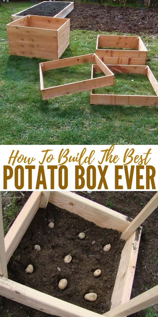 How To Build The Best Potato Box Ever - The box is designed so additional slats can be screwed to the sides as the plants grow and soil is added. In theory, a bottom slat can be temporarily removed to facilitate the harvest of new potatoes.